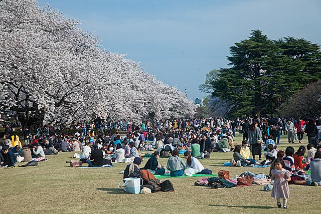 Weitere Kirschblüten-Highlights - Tag 9 | Japan in München