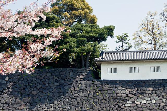 Kaiserpalast Inui-Dori erstmalig zur Kirschblüte zugänglich – Tag 16