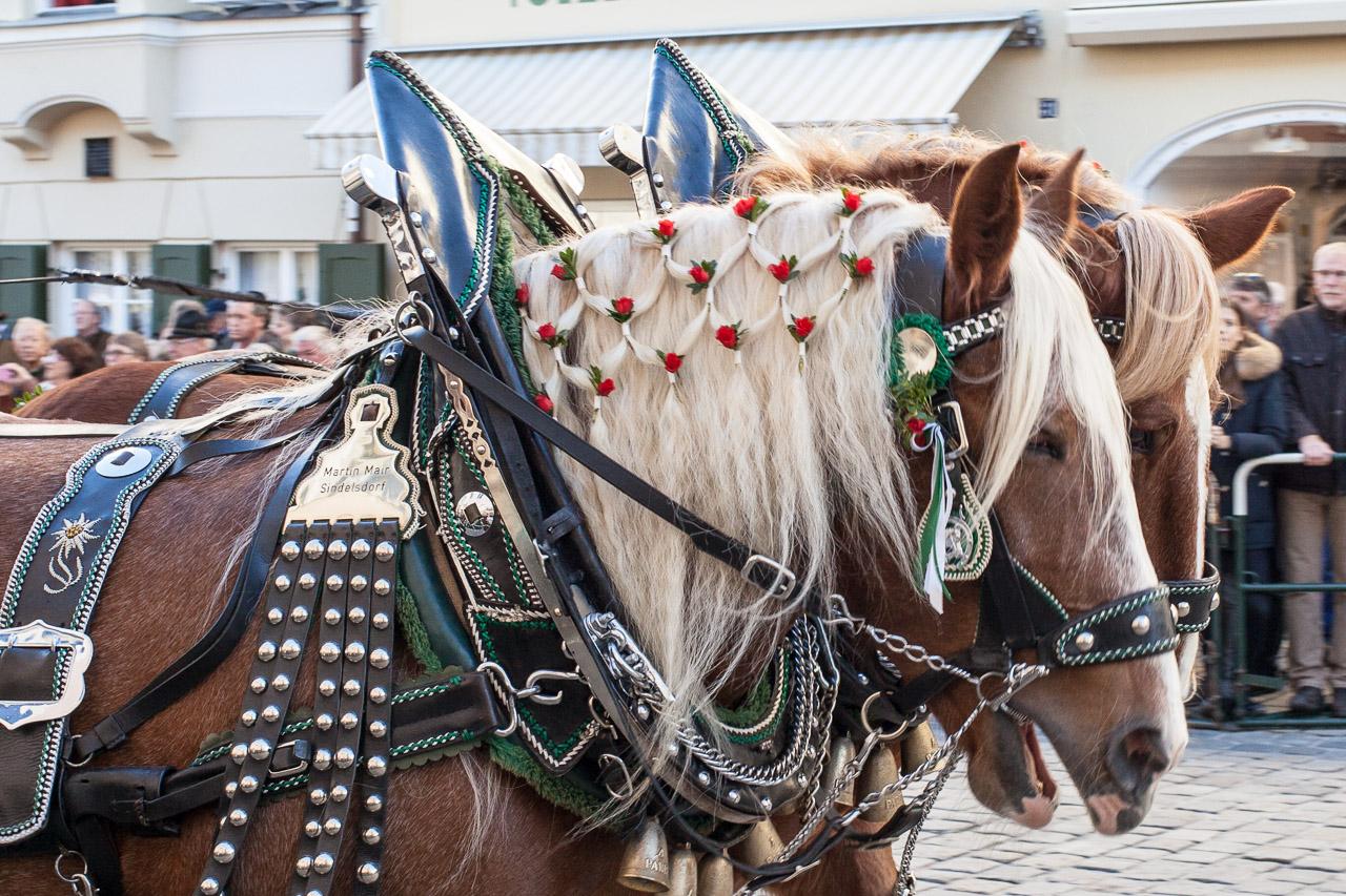 Feste mit Pferden in Japan und Bayern